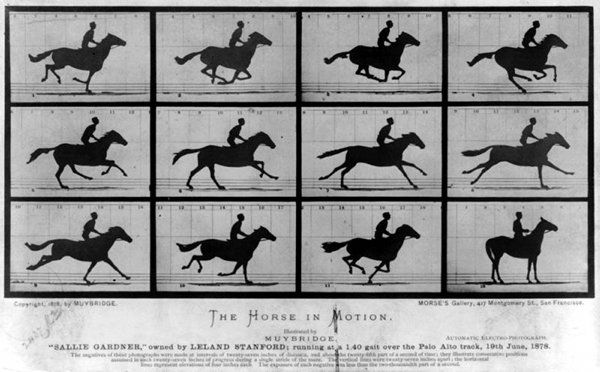 The Horse in Motion - 1878